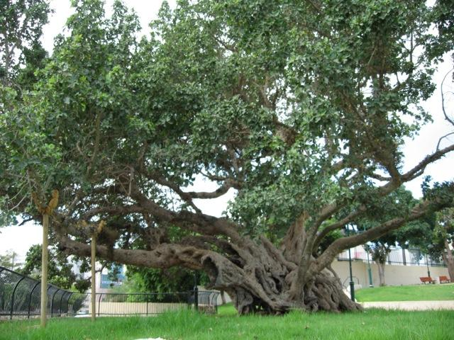 What is the significance of Jesus referring to a sycamine tree